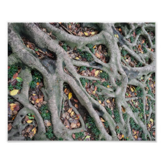 Roots, green grass and fallen off leaves poster