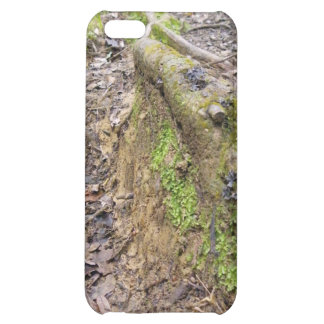 Roots of the Forest iPhone 5C Cases