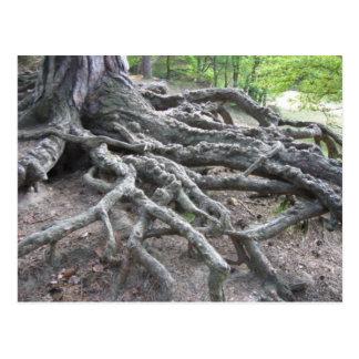Roots Postcard