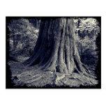 Roots Tree Postcard