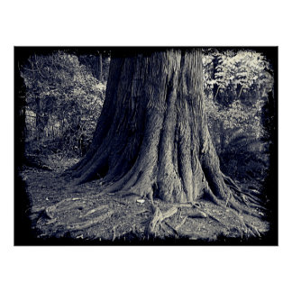 Roots Tree Poster