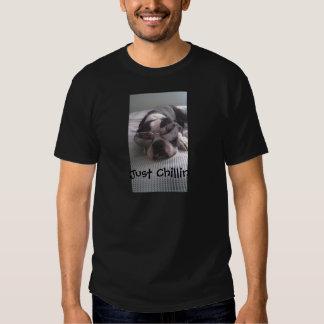 Ropa de Boston Terrier Camisas