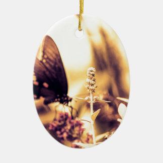 Ropa de la mariposa ornato