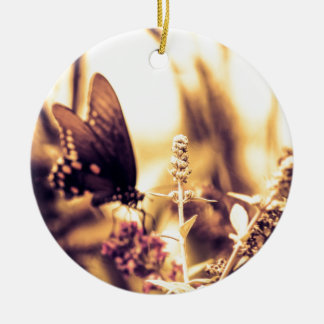 Ropa de la mariposa ornatos