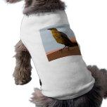 Ropa de oro del mascota del pájaro camisa de mascota