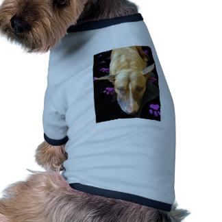 Ropa del mascota de bull terrier del inglés ropa de perro