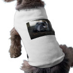 Ropa del mascota de la cabra camisas de mascota
