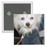 Ropa que lleva de un perro blanco pins