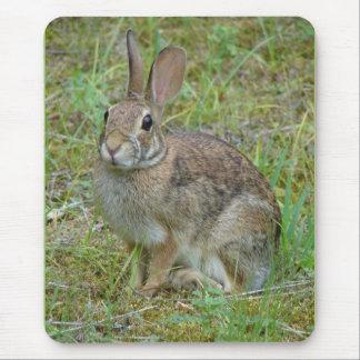 Ropa salvaje y regalos del conejo de rabo blanco d alfombrillas de ratón
