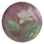 Ropa y regalos de la canción de la magnolia del vi plato