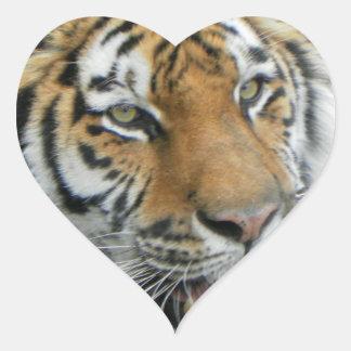 Ropa y regalos principales del tigre calcomanía de corazón