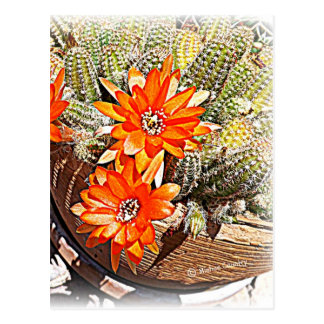 Rope Cactus Blooms Post Cards