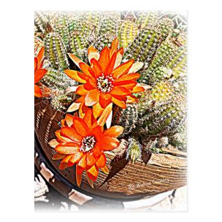 Rope Cactus Blooms Postcard