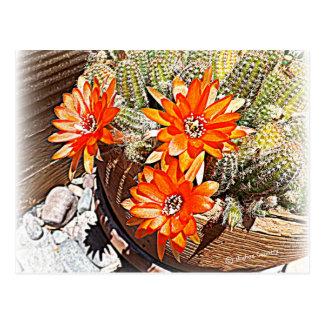 Rope Cactus Blooms Postcards