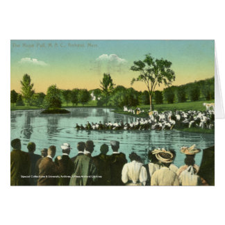 Rope Pull, Campus Pond Card