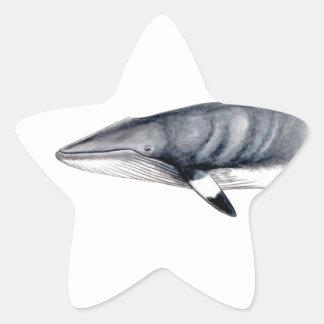 Rorcual aliblanco star sticker