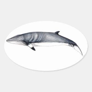 Rorcual aliblanco sticker - Minke whale to sticker