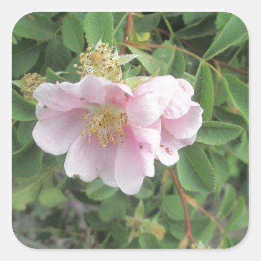 Rosa 4 colcomanias cuadradases