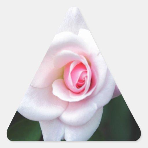 rosa abierto para el amor pegatina triangular