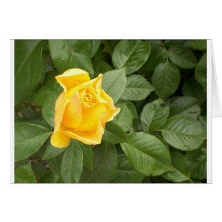 Rosa amarillo con las hojas verdes tarjeton