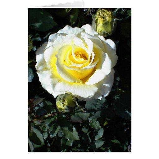 Rosa amarillo con tres tarjetas de los brotes
