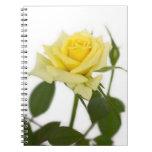 Rosa amarillo cuadernos