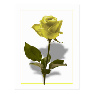 Rosa amarillo de la amistad tarjeta postal