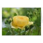 Rosa amarillo de oro tarjetón