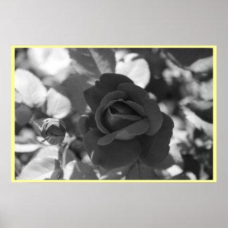 Rosa amarillo de Tejas Posters