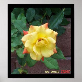 Rosa amarillo de Tejas Poster