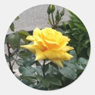 Rosa amarillo de Tejas Pegatina Redonda