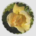 Rosa amarillo del descenso de rocío etiquetas redondas