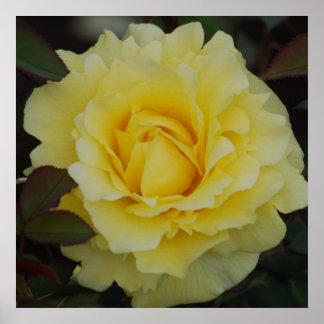 Rosa amarillo del poster de la alegría