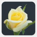Rosa amarillo en el fondo negro pegatina cuadrada