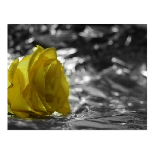Rosa amarillo en fondo de la plata del lado tarjeta postal
