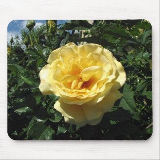 Rosa amarillo en la plena floración alfombrilla de raton