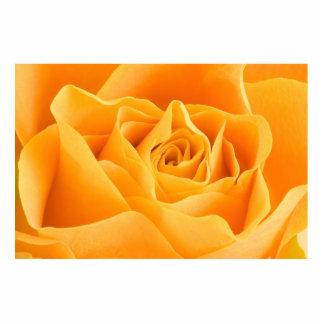 Rosa amarillo esculturas fotográficas
