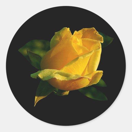 Rosa amarillo grande etiquetas redondas