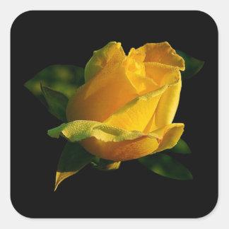 Rosa amarillo grande pegatinas cuadradases personalizadas