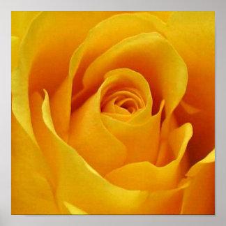 Rosa amarillo grande póster
