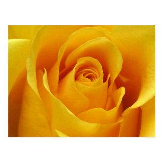Rosa amarillo grande tarjetas postales
