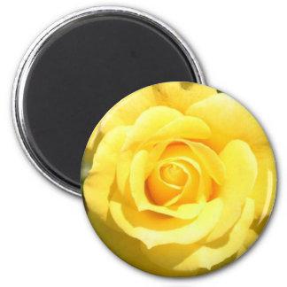 Rosa amarillo imán de frigorifico