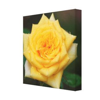 Rosa amarillo impresiones en lienzo estiradas