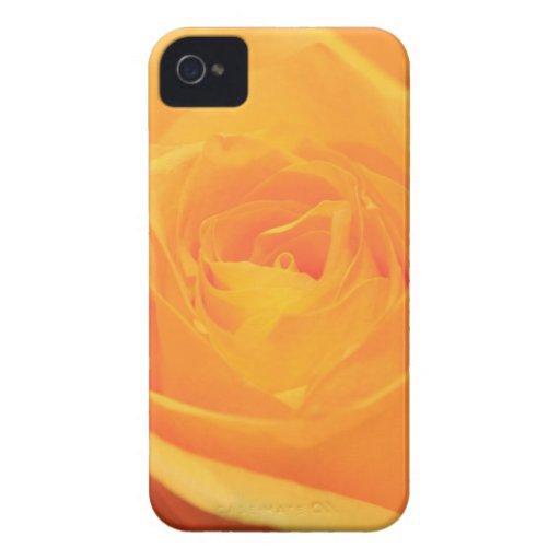 Rosa amarillo iPhone 4 Case-Mate coberturas