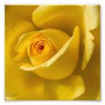 Rosa amarillo macro foto