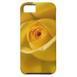 Rosa amarillo macro iPhone 5 funda