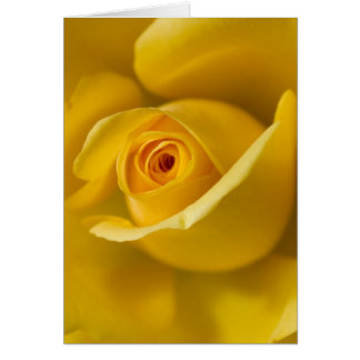 Rosa amarillo macro felicitación