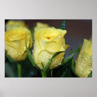 Rosa amarillo impresiones