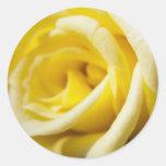 Rosa amarillo pegatinas redondas