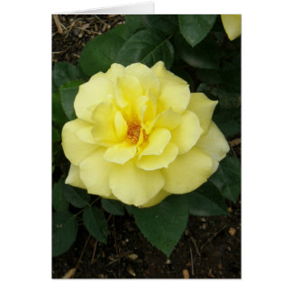 Rosa amarillo perfecto tarjeton
